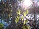 Zimní Slunce na soutoku Orlic u Albrechtic nad Orlicí.